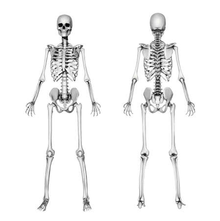 skeleton: A female skeleton, front and back. This is a 3D render - special shaders were used in the rendering process to create the appearance of a pencil drawing.