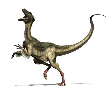 jurassic: The ornitholestes dinosaur lived in North America during the late jurassic period - 3d render  Stock Photo