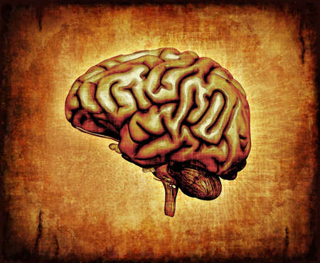 consciousness: A human brain on parchment - digitally manipulated 3d render  Stock Photo
