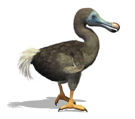 extinction: Le dodo est un oiseau incapable de voler �teint qui a v�cu sur une �le � l'est de Madagascar, dans l'oc�an Indien - rendu 3D avec peinture num�rique