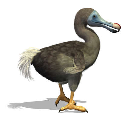 extinct: The dodo is an extinct flightless bird that lived on an island east of Madagascar in the Indian Ocean - 3d render with digital painting  Stock Photo