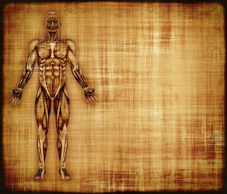 body structure: An old parchment featuring the muscles of the human body - 3d render with digital painting  Stock Photo