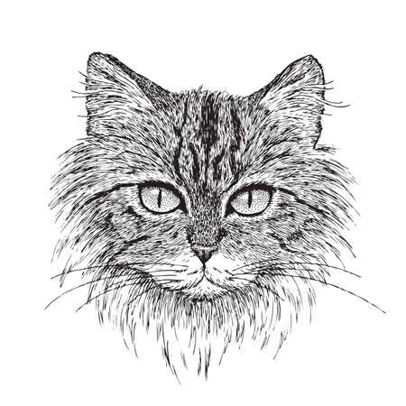 cute cat: Detailed vector from my pen   ink drawing of a tabby cat