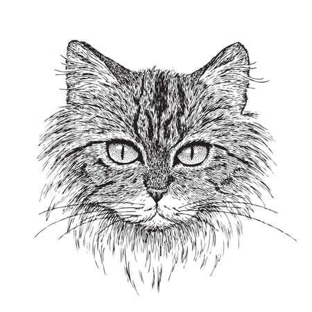 dibujos lineales: Vectorial detallada de mi dibujo a tinta pluma de un gato atigrado