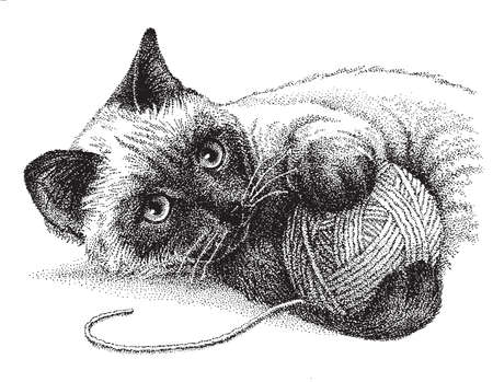 cat: A siamese cat enjoys playing with a ball of yarn