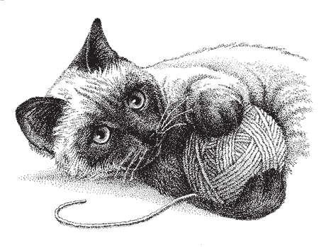 siamese: Eine siamesische Katze spielt gern mit einem Wollkn�uel Illustration