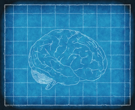 Blueprint of the human brain - digitally manipulated 3D render. Stock Photo