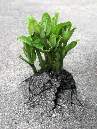 A plant breaks through the asphalt, representing the triumph of nature over humanity