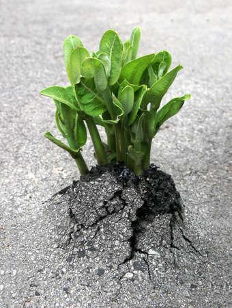 humanidad: Una planta se rompe a trav�s del asfalto, lo que representa el triunfo de la naturaleza sobre la humanidad