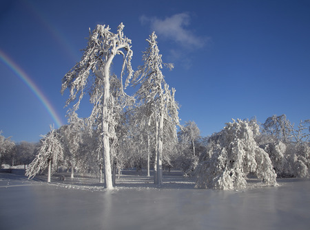 enhances: Mist from Niagara Falls transforms trees into ice sculptures, and a rainbow created by ice crystals in the air enhances the scene.