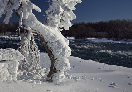 Tree at Niagara Falls State Park loaded with rime ice, formed by the mist from the falls. photo