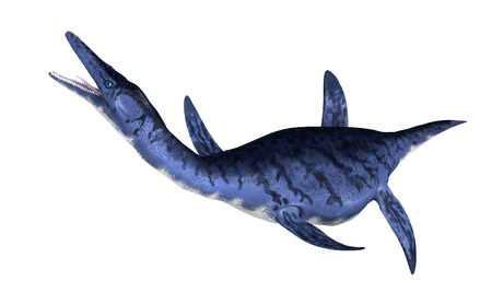 prehistoric animals: The Dolichorhynchops was an oceangoing prehistoric reptile that lived during the Late Cretaceous period.