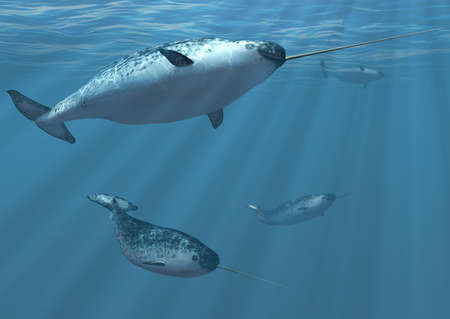 tusk: A group of narwhal whales undersea  3d render.