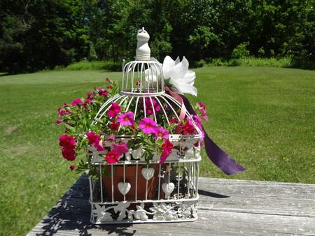hanging flowers: hanging flowers