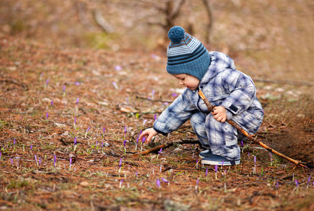 two year: Adorable two year old boy picking flowers in the early spring