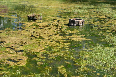 green carpet: Natural pond with great vegetation giving it a green carpet texture Stock Photo
