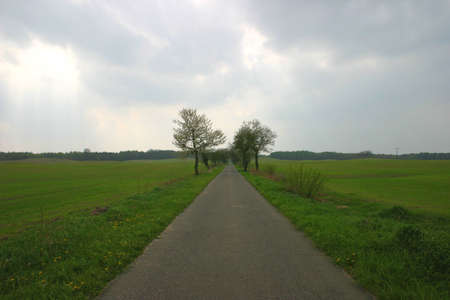 horizont: Straight road between fields in perspective to the horizont.