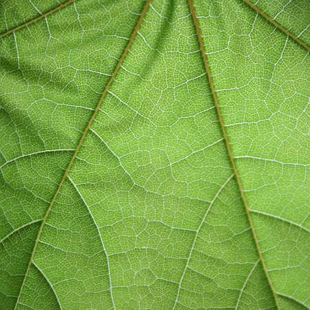 visible: Green leaf closeup with visible structure.