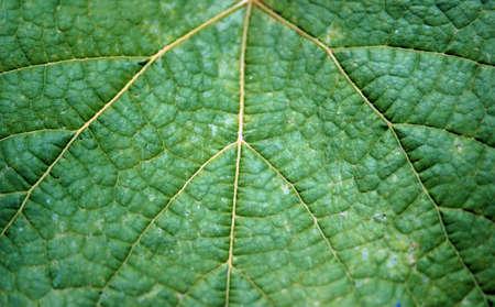 matt: Green matt leaf structure.