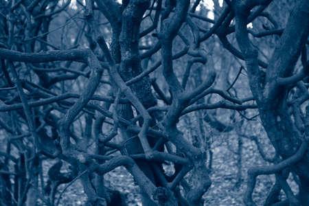 sinister: Dark monochrome forest, sinister tangled trees detail