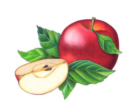 full red: Una composizione di un pieno di mele rosse e un affettato uno. Disegnati a mano illustrazione.