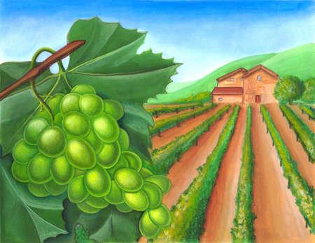 Grape and vineyard in a rural landscape. Wine label illustration. illustration