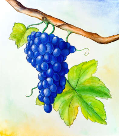 Wine grape and leaf. Hand painted illustration. illustration