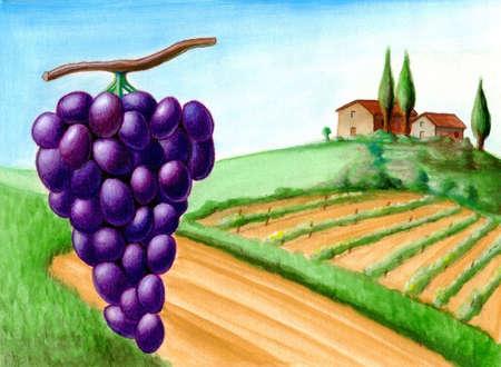 Grape and vineyard. Wine label illustration. illustration