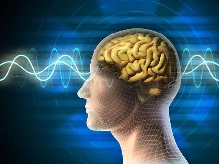 cerebro: Cabeza y el cerebro humano. Diferentes tipos de formas de onda producidas por la actividad cerebral se muestra en el fondo. Ilustración digital.