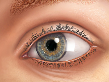 lacrimal: External view of an healthy human eye. Digital illustration. Stock Photo