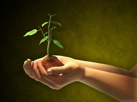ecosavy: Female hands holding some soil and a seedling. Digital illustration. Clipping path included to separate hands and seedling from background Stock Photo