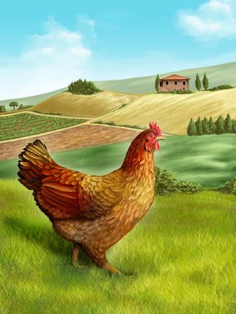 gallina con huevos: Gallina en un hermoso paisaje rural. Ilustración digital.