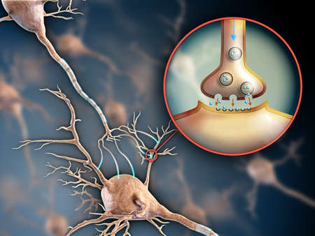 Two neurons connecting by using electrochemical transmissions. Digital illustration. Stock Photo