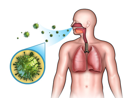 cold virus: Some virus entering the respiratory system through the nose. Digital illustration. Stock Photo