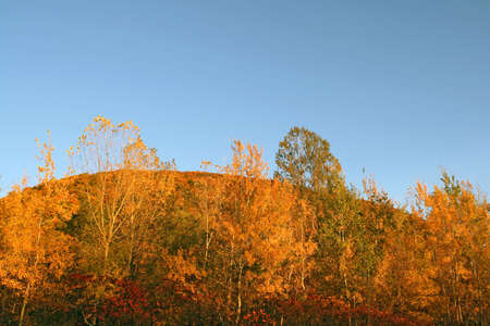 Autumn forest on a hill under the blue sky. photo