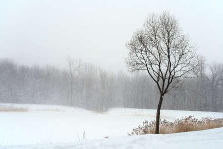 Tree in misty haze of winter blizzard. Beautiful winter landscape. photo
