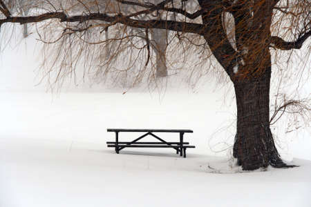Picnic table in snow under a tree during winter blizzard. photo