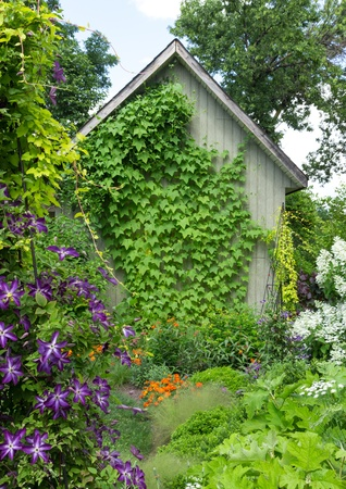 vertical garden: Little house in a flowering garden, ivy crawling up the wall