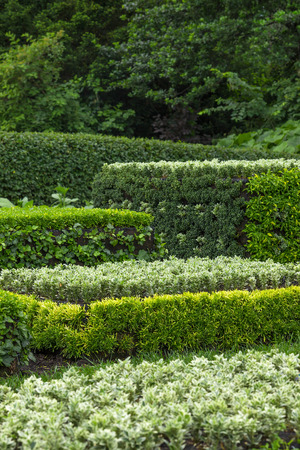 ornamental garden: Ornamental garden  Trimmed shrubs of different shades of green  Stock Photo