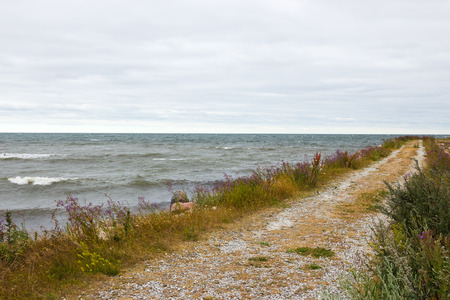 nordic nature: Road along the seaside  Nordic nature of Gotland, Sweden