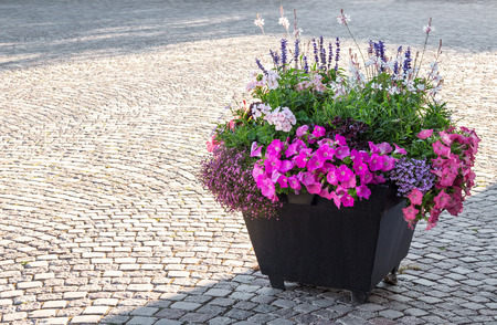 flower bed: Flowers decorating a city square in sunlight  Stock Photo