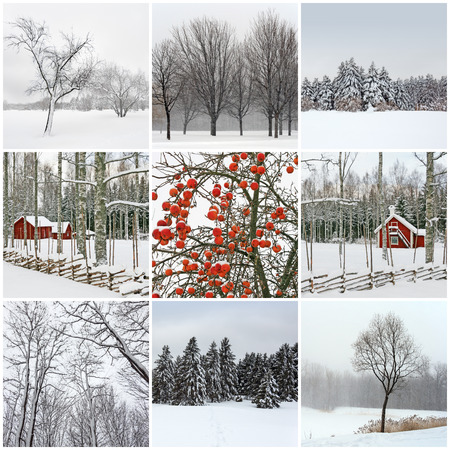 scandinavian landscape: Snowy winter landscapes  Collection of 9 images  Stock Photo
