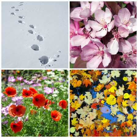and four of the year: Four seasons  Nature in winter, spring, summer and autumn  Stock Photo