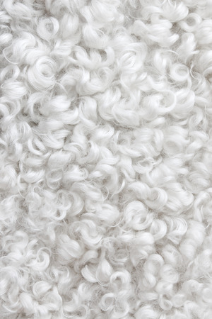 sheepskin: Primer plano de la piel de cordero rizado blanco Fondo abstracto