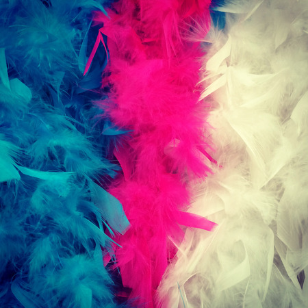 feather boa: Detail of colorful feather boa  blue red and white