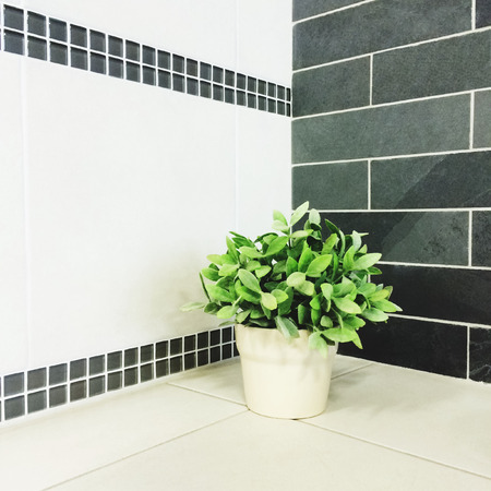 decor: Green plant in the kitchen with tiles decor  Stock Photo