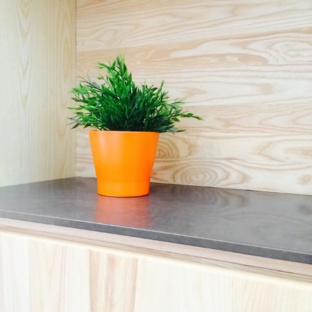 contemporary kitchen: Green plant in orange pot decorating contemporary wooden kitchen.