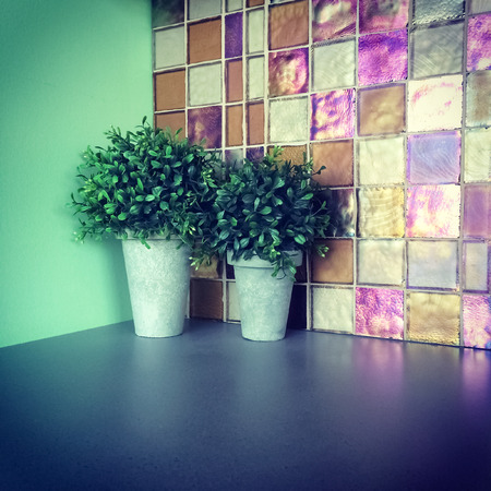 Green plant decorating a kitchen with colorful tiles decor.