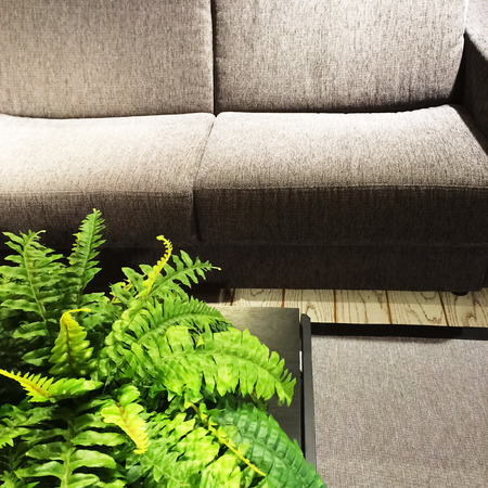 furniture detail: Fern plant decorating a living room with gray sofa.
