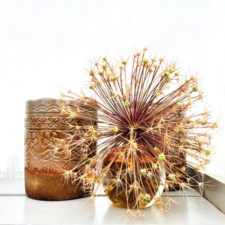 decor: Decorative plant and ceramic vases. Home decor.